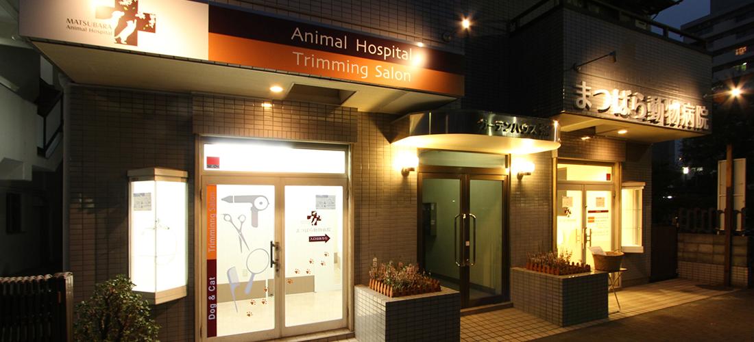 夜間 動物 病院 湘南夜間救急動物病院SEAMeC シーメック